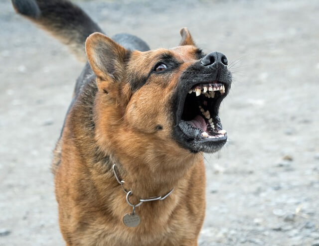 CBD Oil: Can It Help Dogs With Aggression?