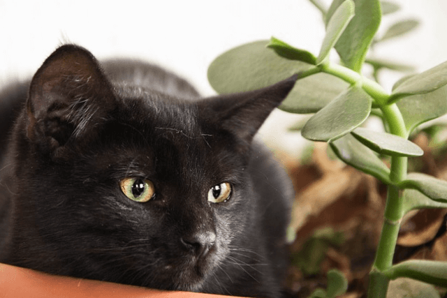 CBD oil could benefit your cat