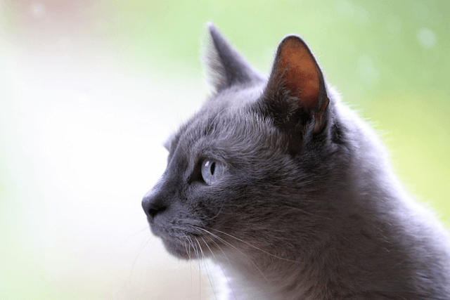 cbd oil side effects for cats