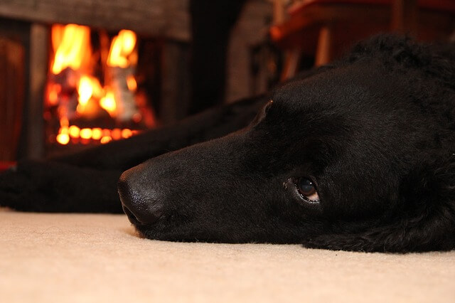 why dogs' joints ache in colder weather
