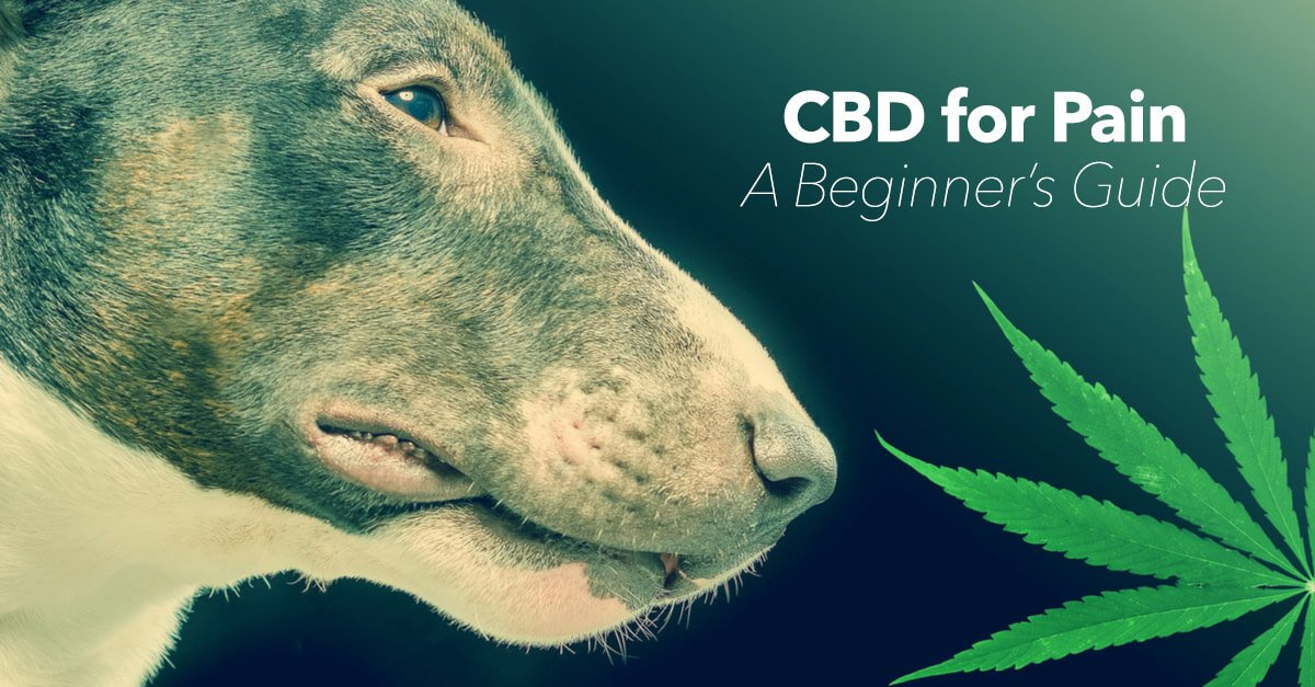 A guide to understanding canine pain management using Cannabidiol (CBD)