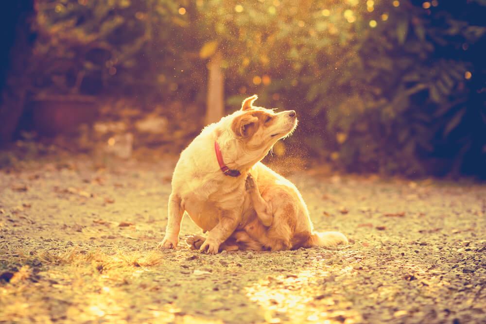 CBD and an Itchy Dog: Can Canna