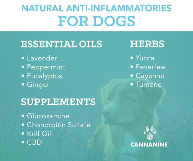 Natural Anti-Inflammatories for Dogs
