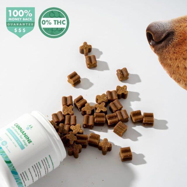 A brown dog snout sniffs at CBD dog treats.