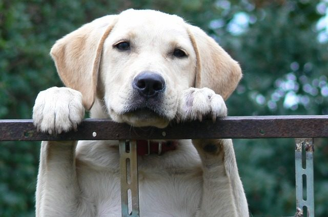 symptoms of separation anxiety in dogs