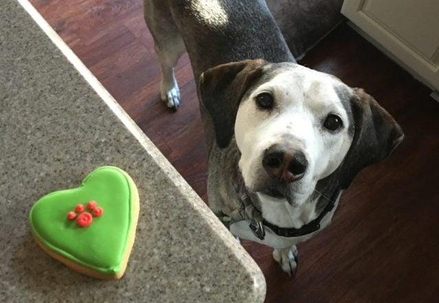 homemade CBD treats for picky eaters