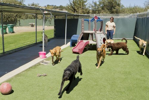 dog daycare for separation anxiety
