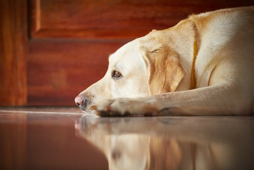 anxiety medication for dogs