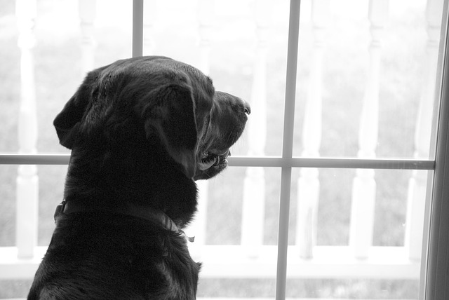 triggers for separation anxiety in dogs