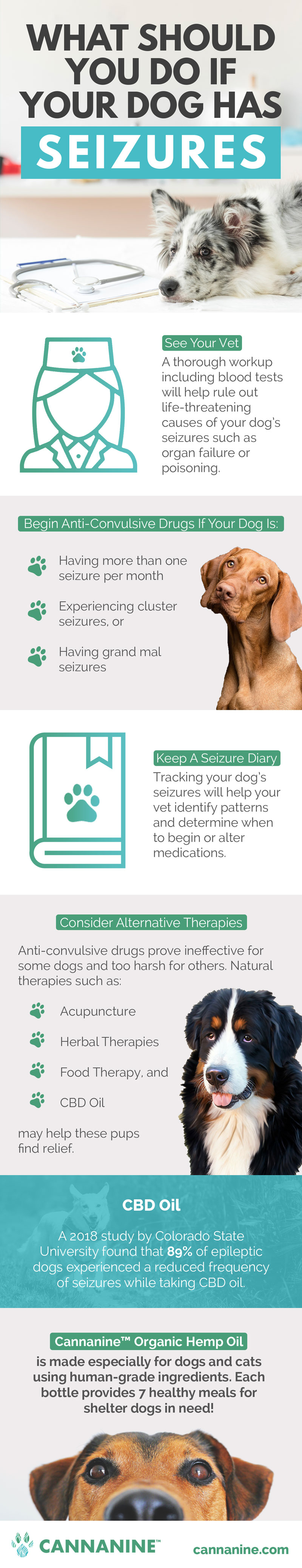 Alternative therapies for epilepsy in dogs