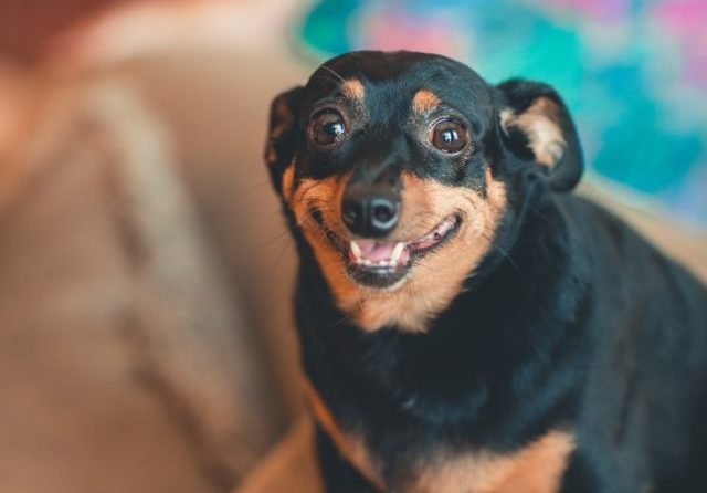 CBD For Dog Anxiety: 10 Stressful Situations It Can Help