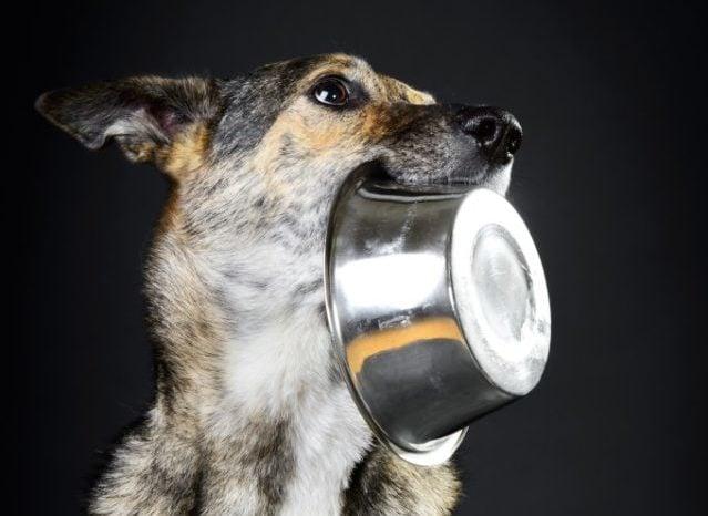 dog not eating stress