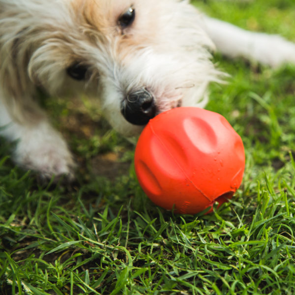 The BetterBall™ - A Stronger, Safer, Easier to Clean Stuffable Ball Dogs Go Crazy Over! (2 PACK)