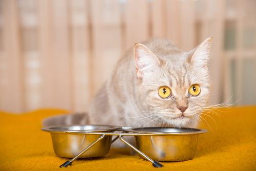 sick cat wont eat