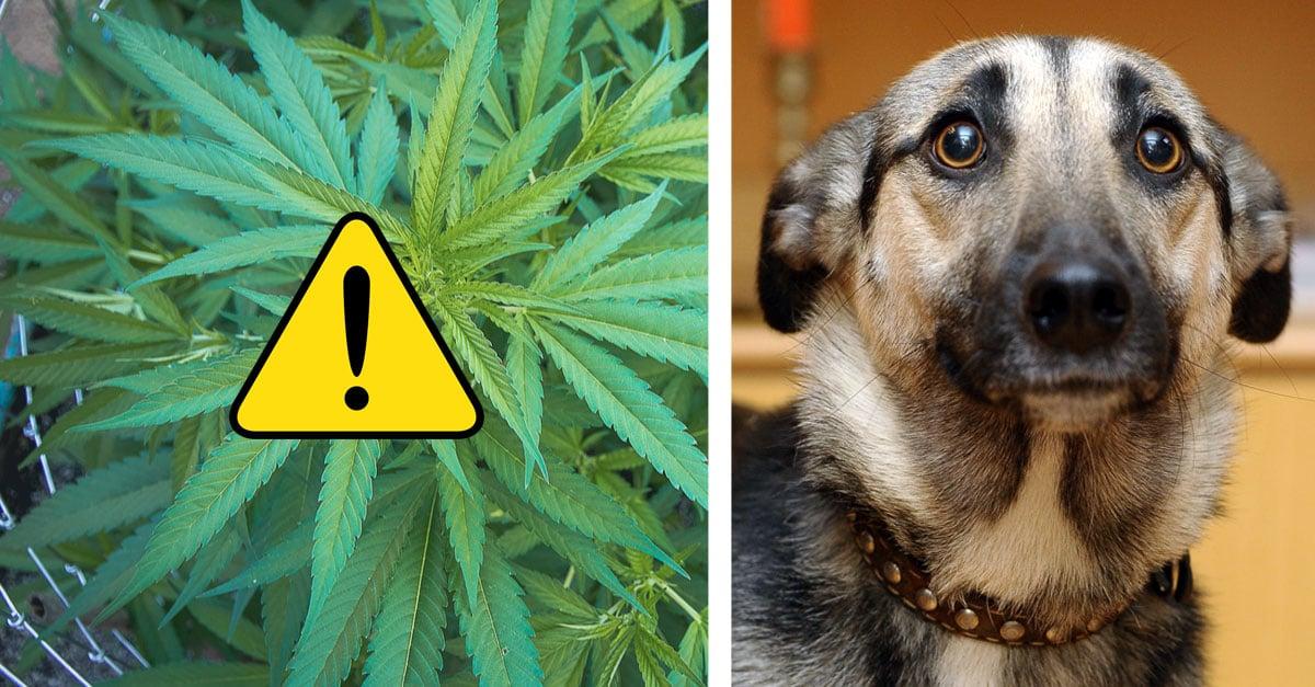 can anxiety kill a dog