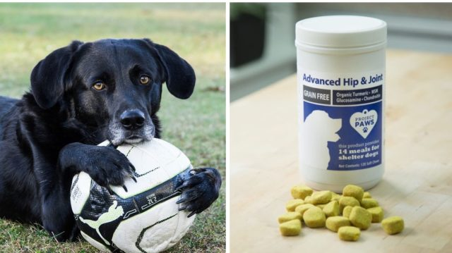 vet recommended joint supplement