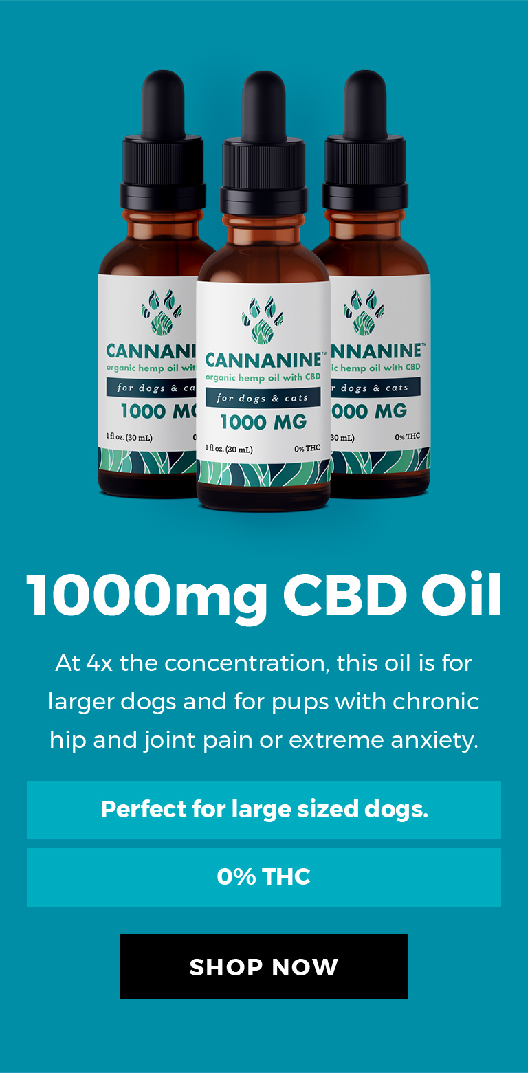 1000mg CBD Oil - At 4 times the concentration, this oil is for larger dogs and for pups with chronic hip and joint pain or extreme anxiety.