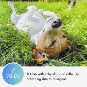 Cannanine™ Ultra-PremiumFull Spectrum Hemp CBD Oil For Dogs (1000 mg)