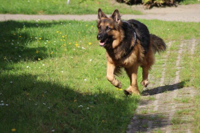 Example of an active dog