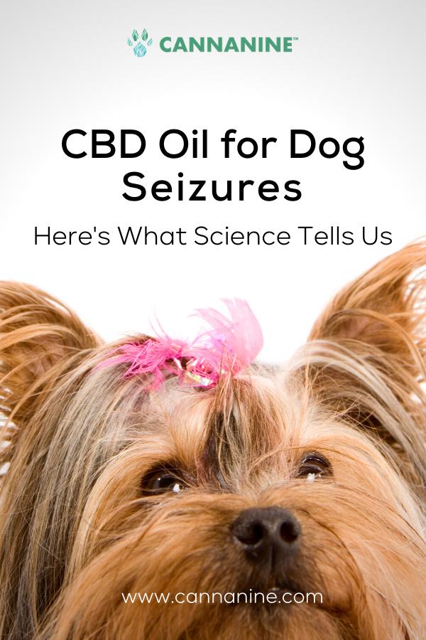 CBD Oil for Dog Seizures