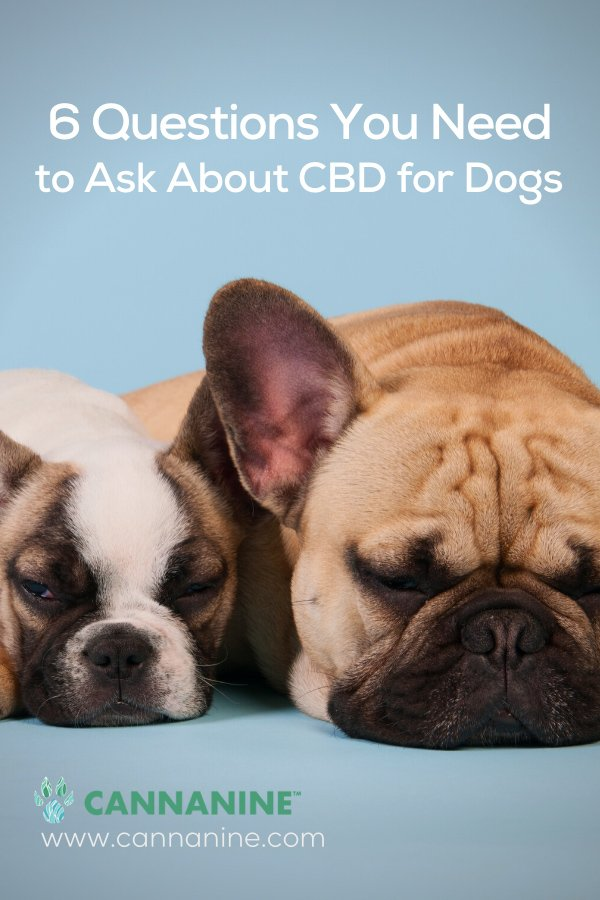 Pinterest pin CBD for dogs