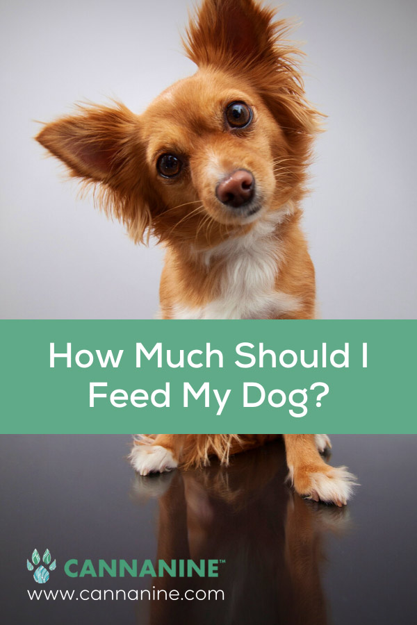 Pinterest how much should I feed my dog