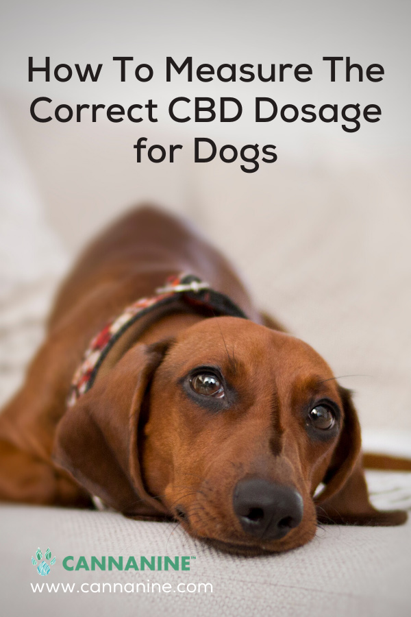 How to Measure the Correct CBD Dosage for Dogs