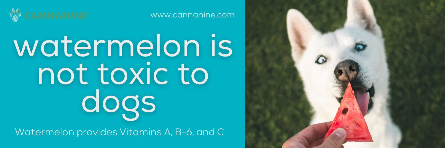 watermelon is not toxic to dogs and won't cause an upset stomach for dogs